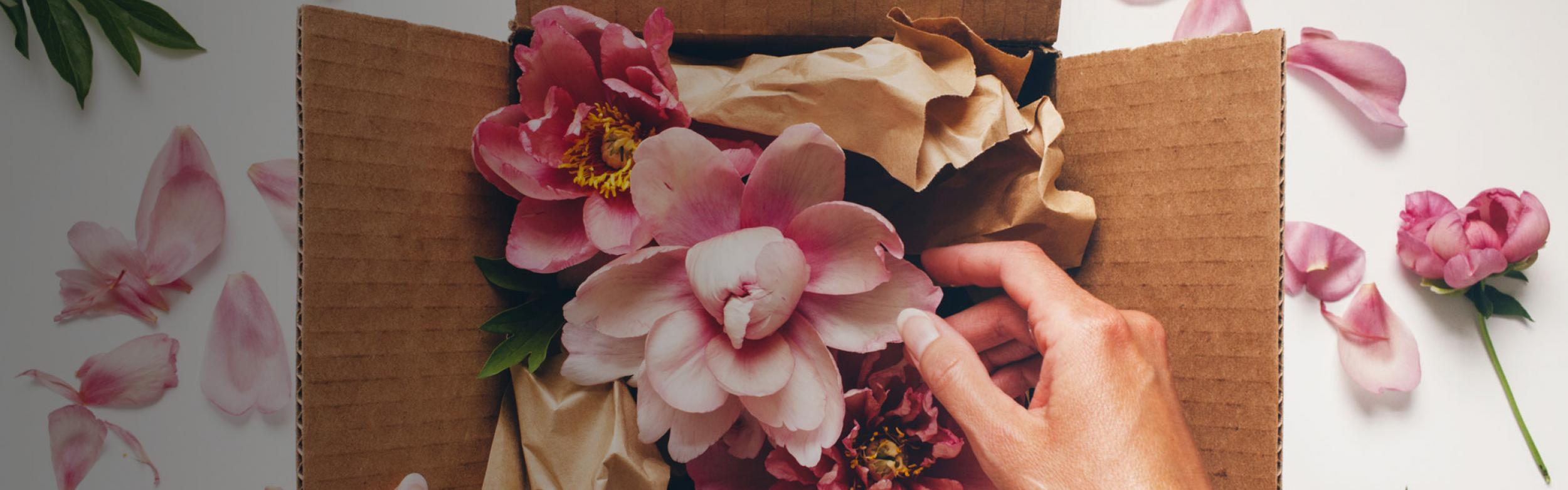 A hand carefully unwrapping packed pink peonies from a box with scattered peonies and leaves in the background.